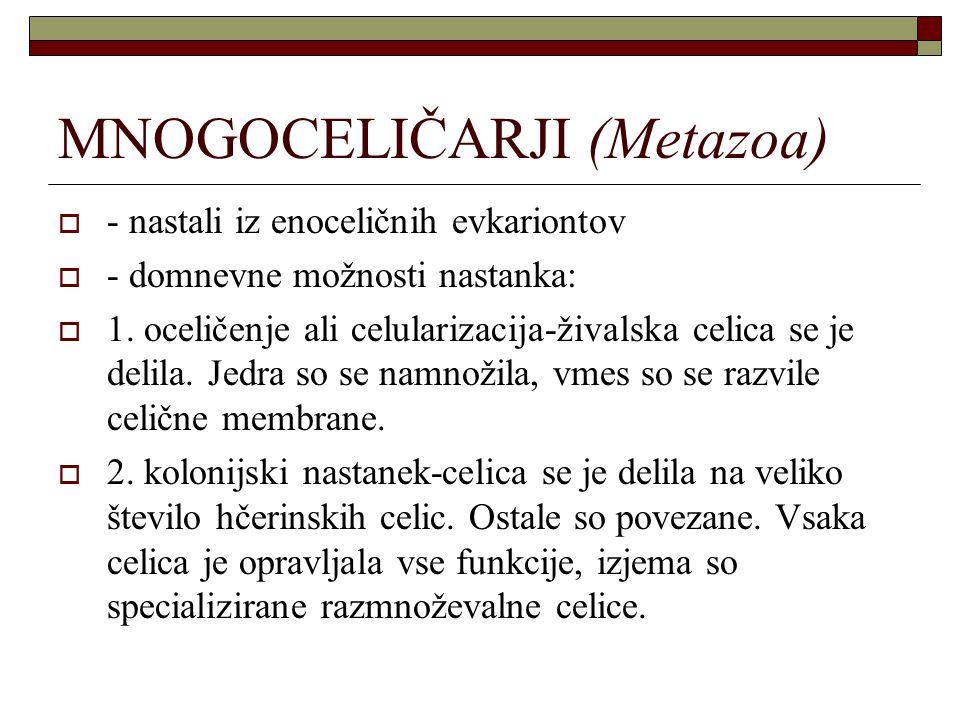 MNOGOCELIČARJI (Metazoa)