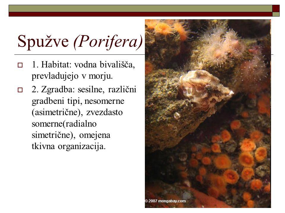 Spužve (Porifera) 1. Habitat: vodna bivališča, prevladujejo v morju.