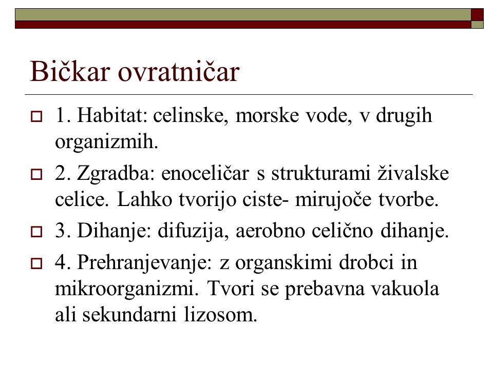 Bičkar ovratničar 1. Habitat: celinske, morske vode, v drugih organizmih.