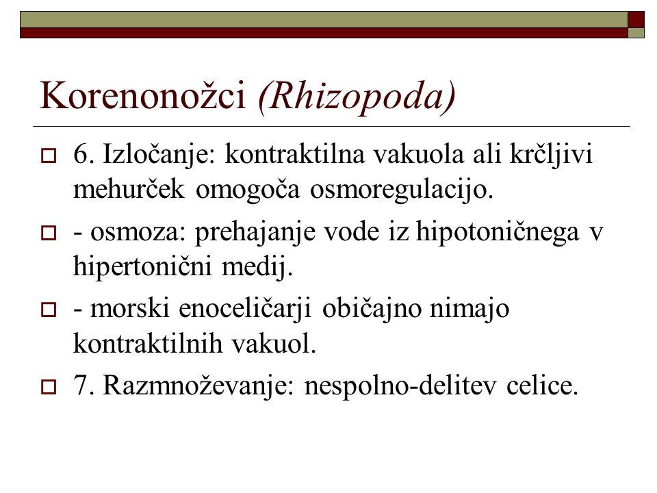 Korenonožci (Rhizopoda)