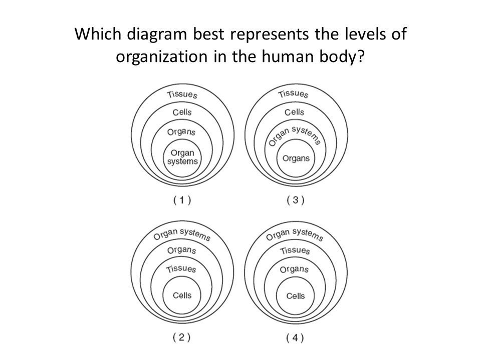 diagram 17 best images about biology 3 diagram schematic