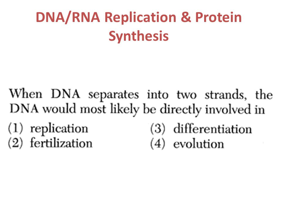 DNA/RNA Replication & Protein Synthesis
