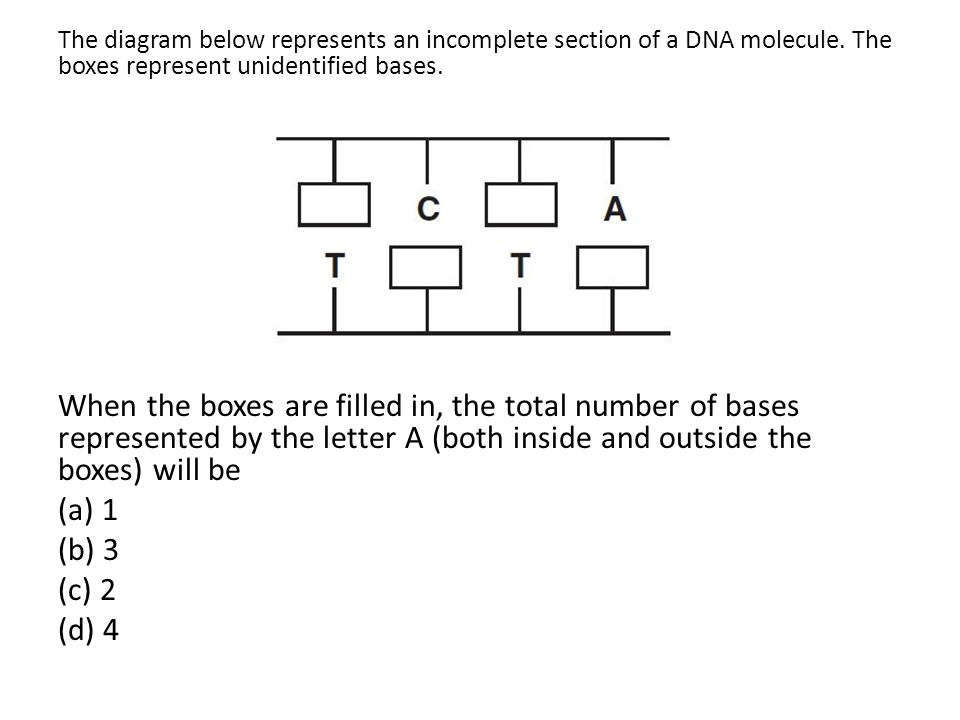 The diagram below represents an incomplete section of a DNA molecule