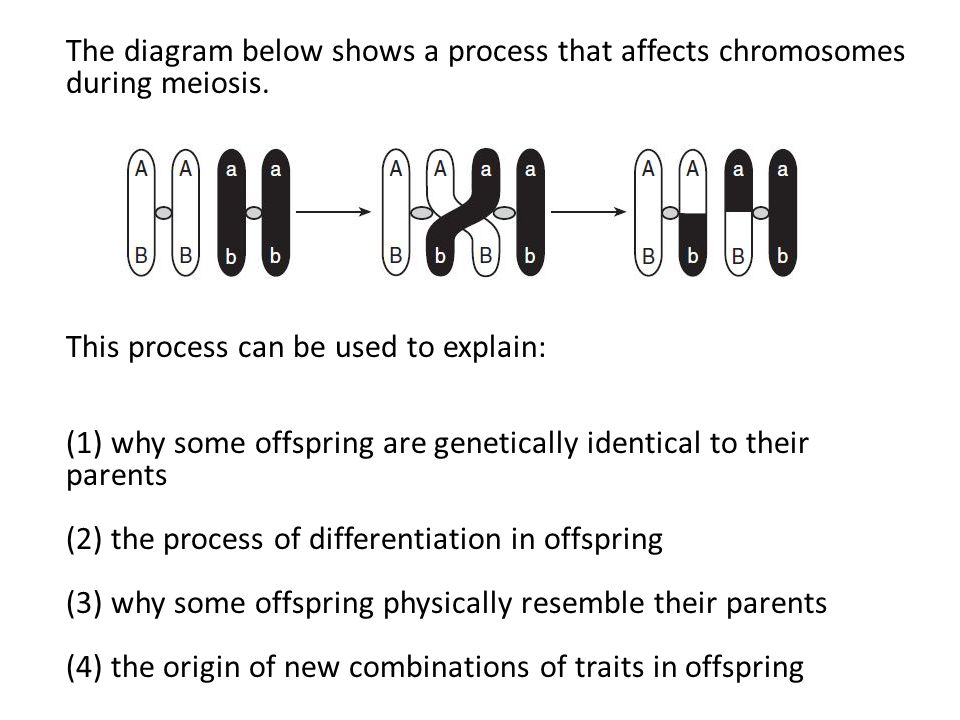 the diagram below shows the process of dna | Diarra