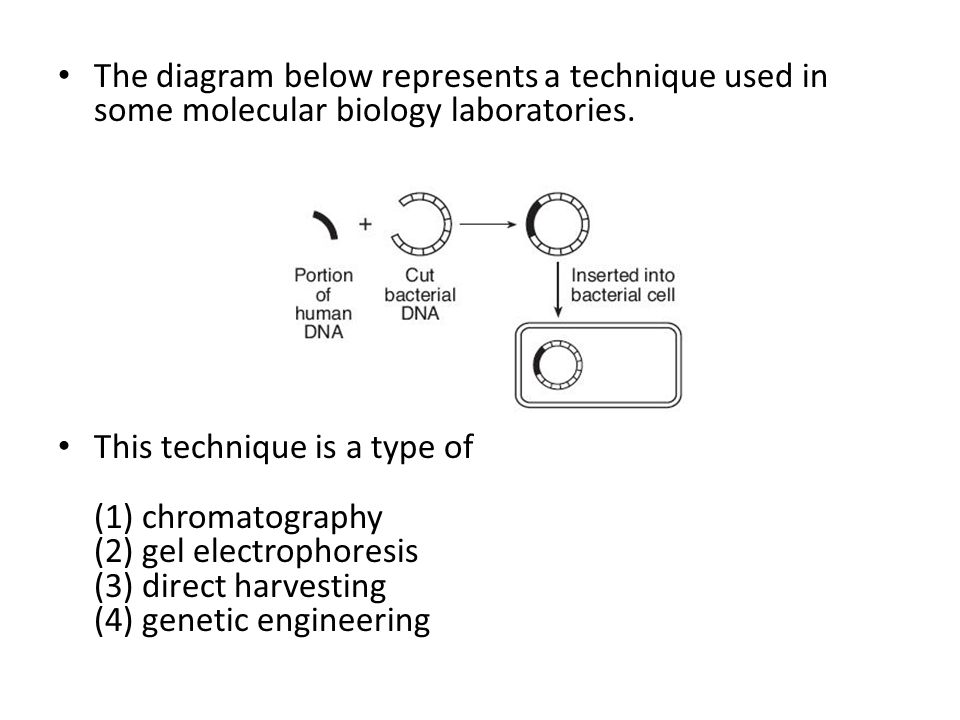 The diagram below represents a technique used in some molecular biology laboratories.