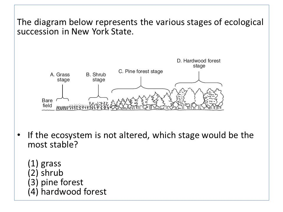 The diagram below represents the various stages of ecological succession in New York State.