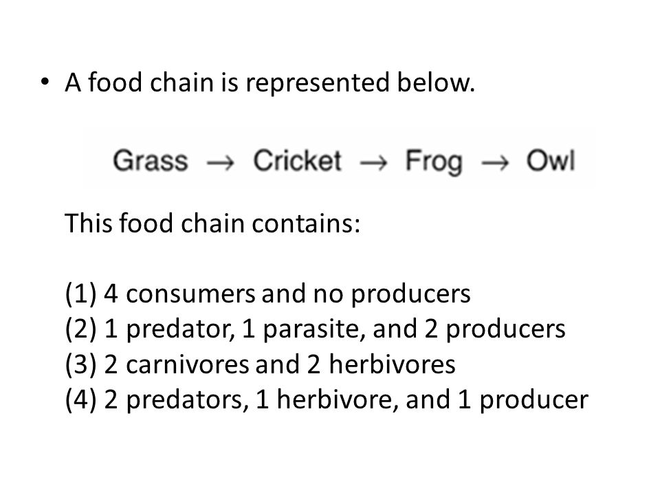 A food chain is represented below