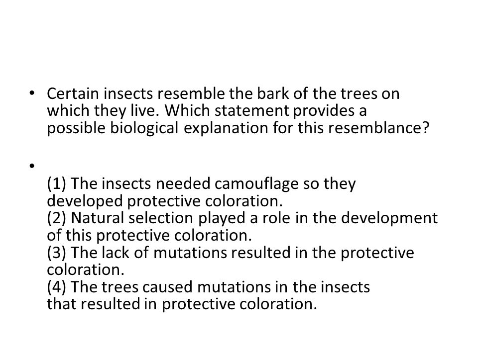 Certain insects resemble the bark of the trees on which they live