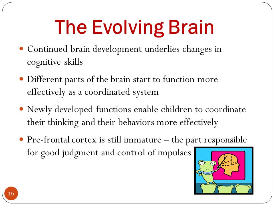 The Evolving Brain Continued brain development underlies changes in cognitive skills.