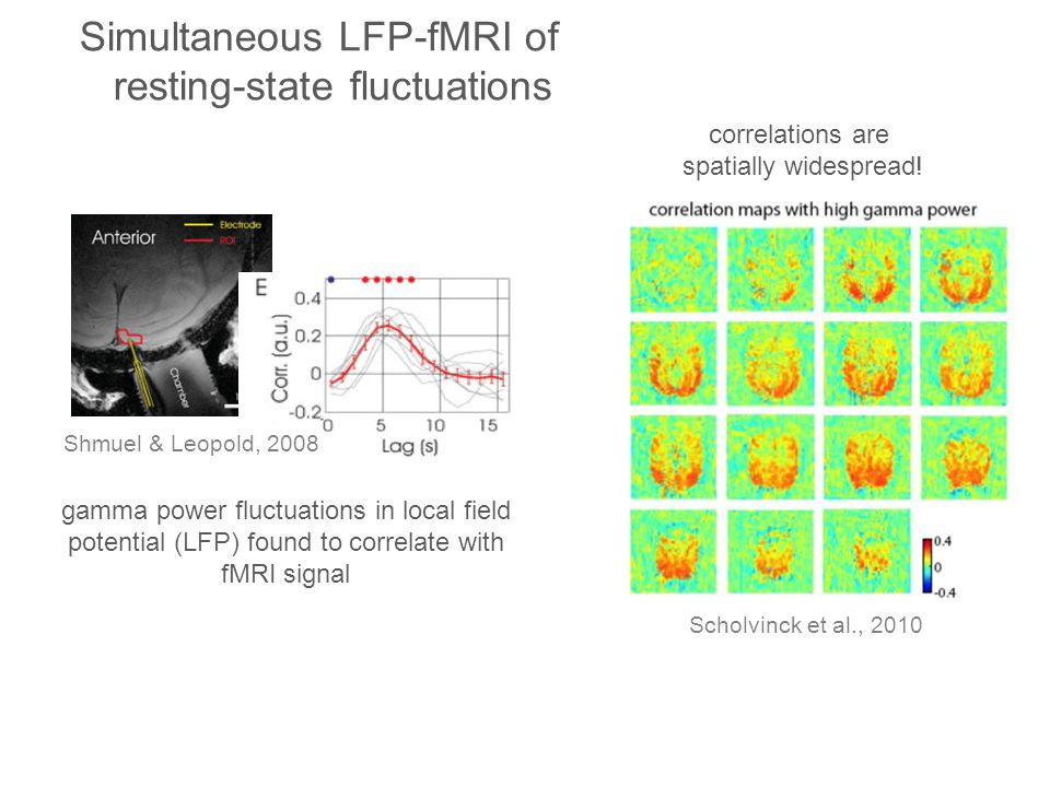 Simultaneous LFP-fMRI of resting-state fluctuations