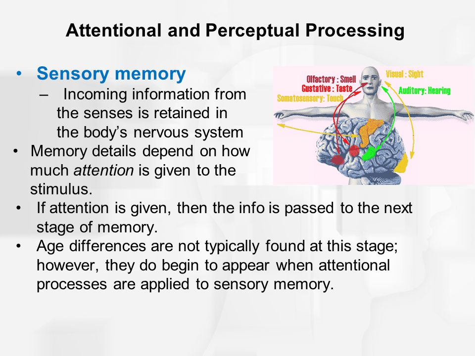 Attentional and Perceptual Processing