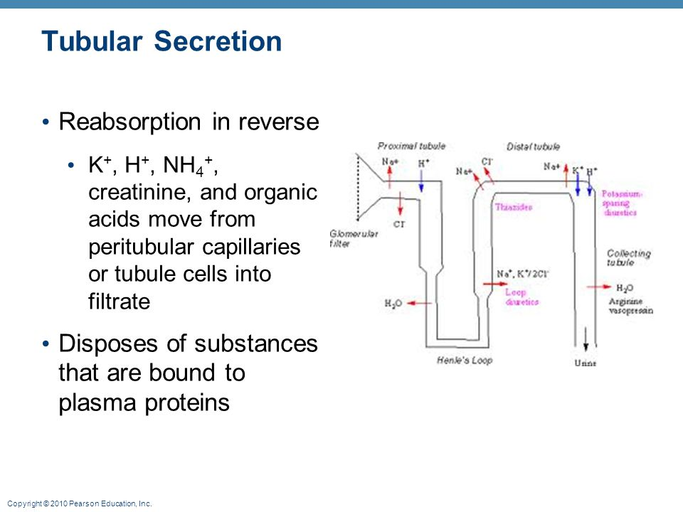 Tubular Secretion Reabsorption in reverse