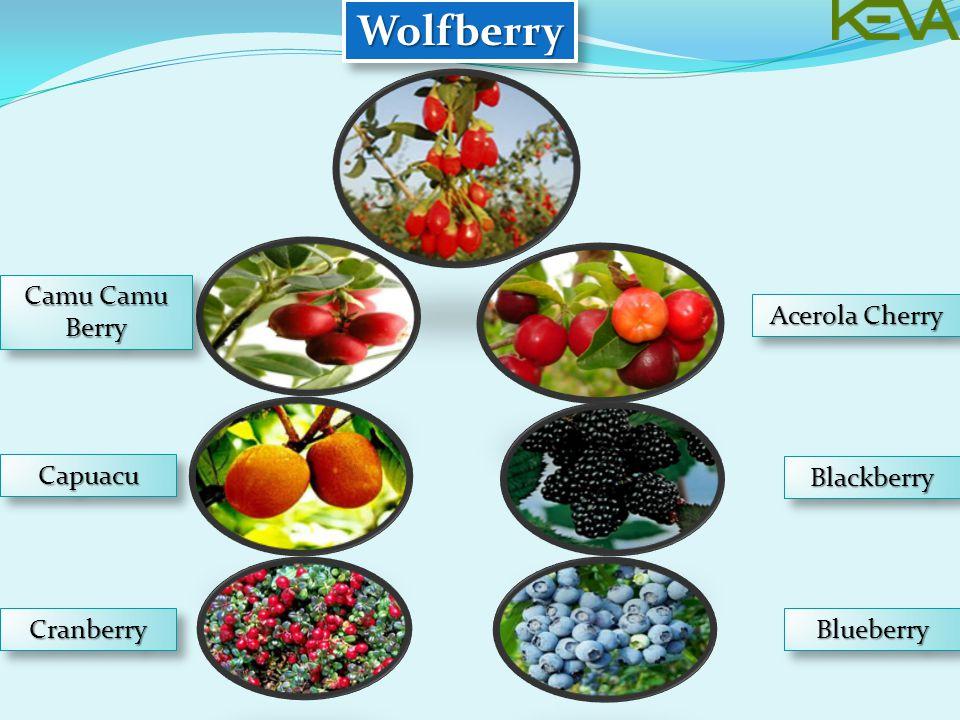 Wolfberry Camu Camu Berry Acerola Cherry Capuacu Blackberry Cranberry