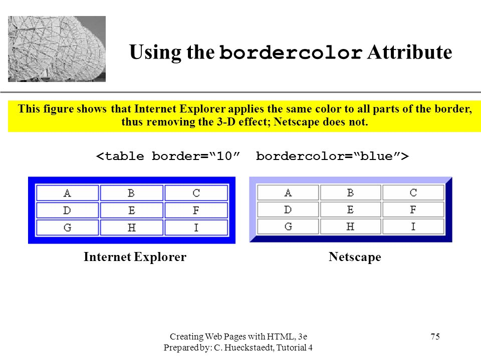 New perspectives on creating web pages with html ppt for Html table border color