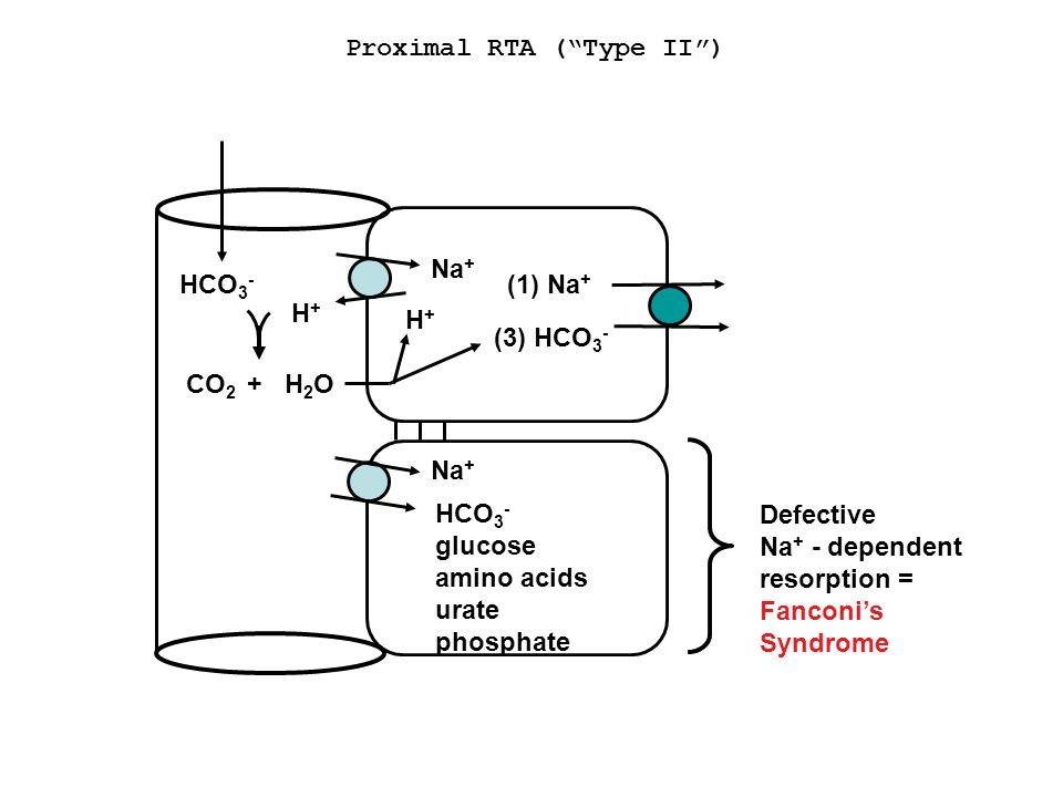 Proximal RTA ( Type II )