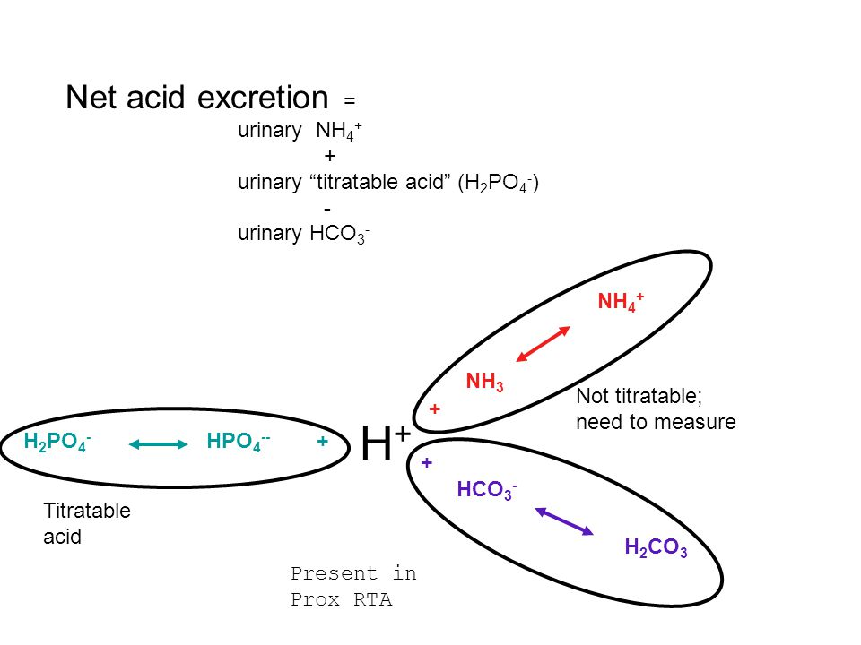 H+ Net acid excretion = urinary NH4+ +