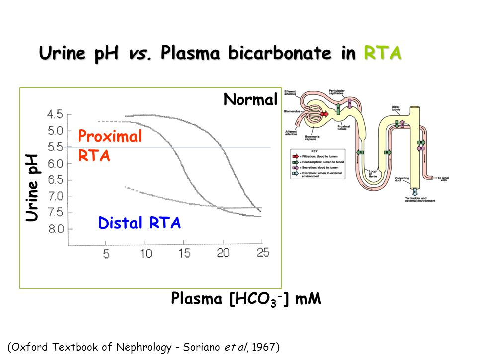 Urine pH vs. Plasma bicarbonate in RTA