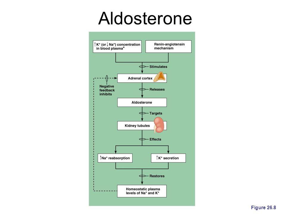 Aldosterone Figure 26.8