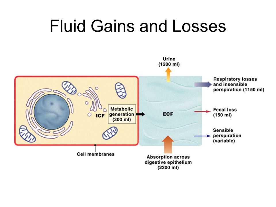 Fluid Gains and Losses Figure 27–3