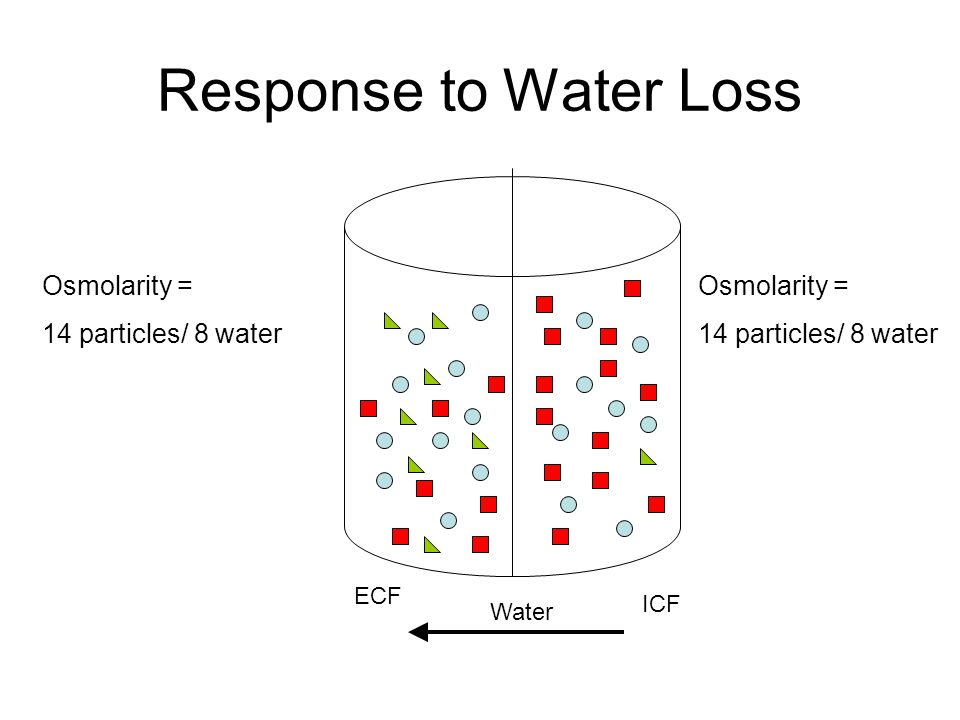 Response to Water Loss Osmolarity = 14 particles/ 8 water Osmolarity =