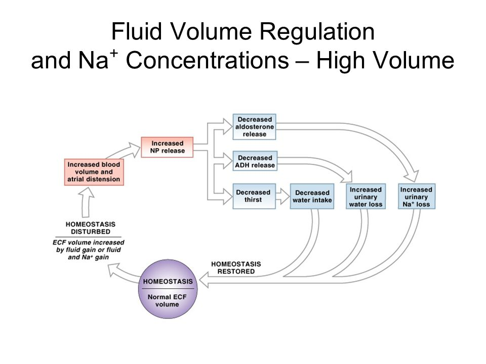 Fluid Volume Regulation and Na+ Concentrations – High Volume