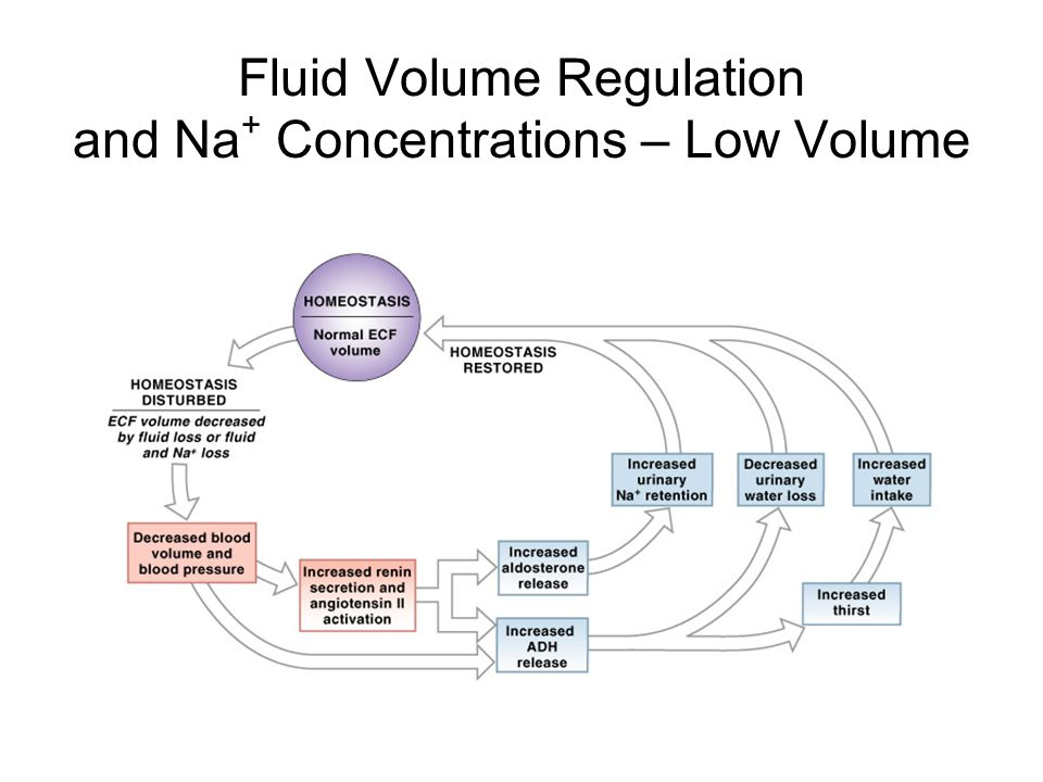 Fluid Volume Regulation and Na+ Concentrations – Low Volume