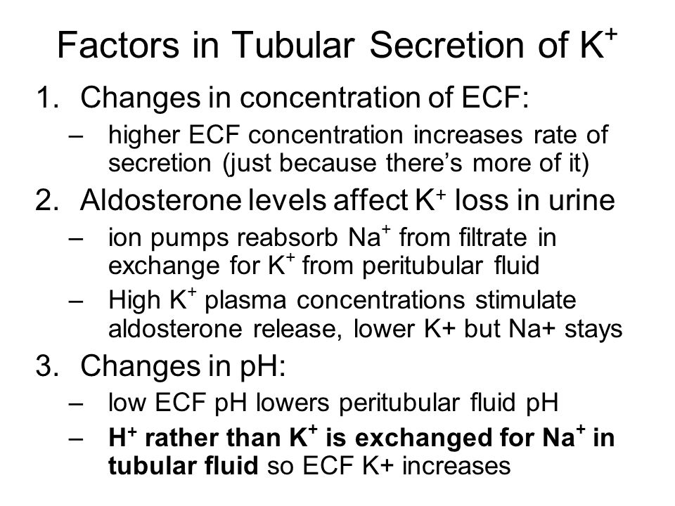 Factors in Tubular Secretion of K+