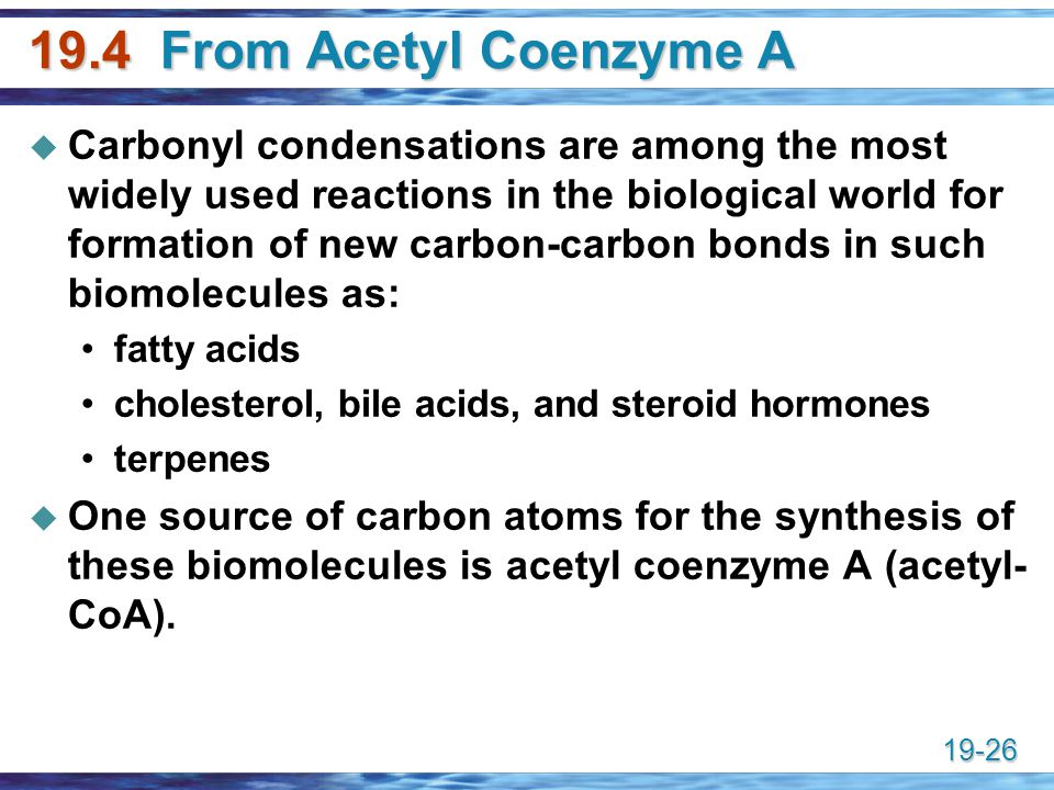 19.4 From Acetyl Coenzyme A