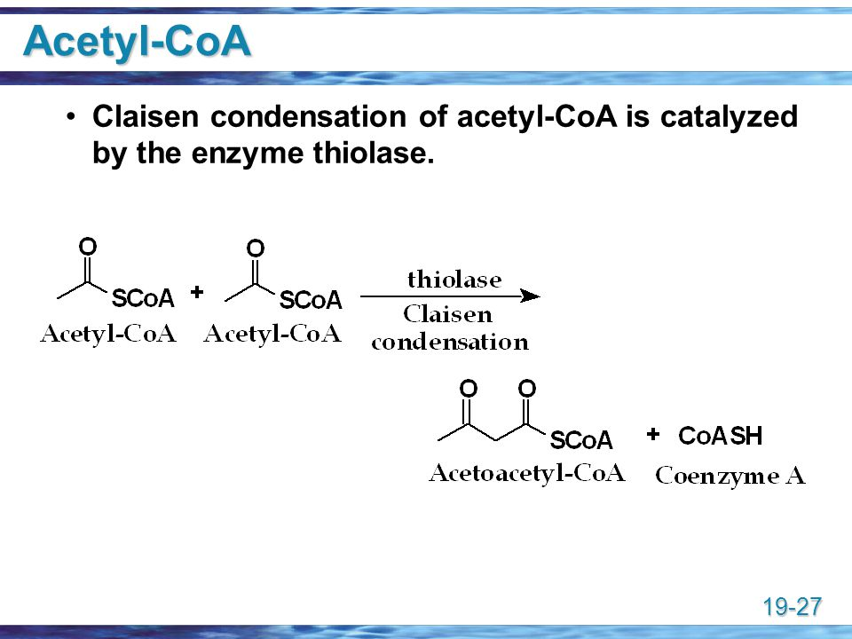 Acetyl-CoA Claisen condensation of acetyl-CoA is catalyzed by the enzyme thiolase.