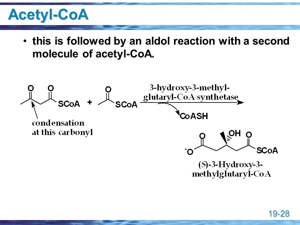 Acetyl-CoA this is followed by an aldol reaction with a second molecule of acetyl-CoA.