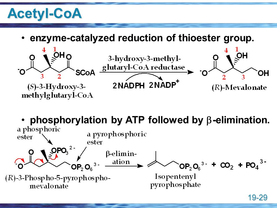 Acetyl-CoA enzyme-catalyzed reduction of thioester group.