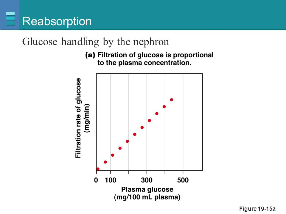 Reabsorption Glucose handling by the nephron Figure 19-15a