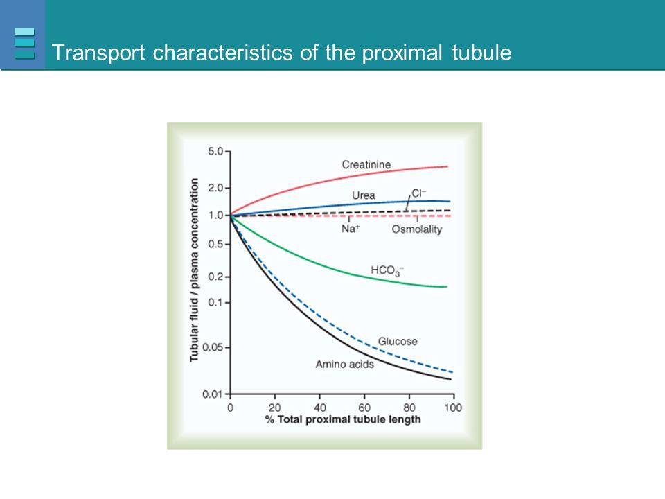 Transport characteristics of the proximal tubule