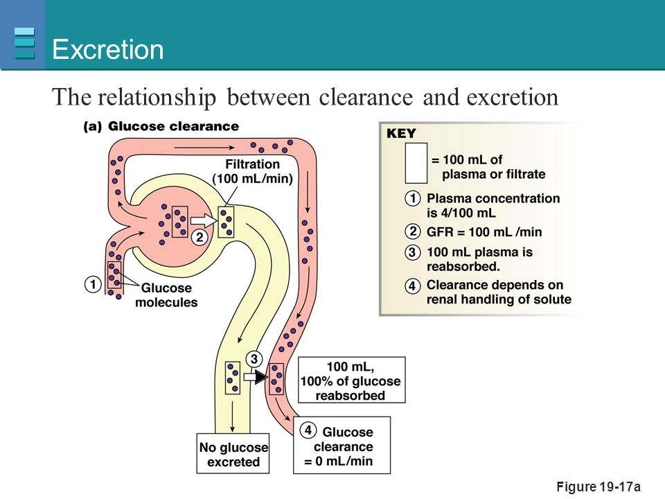 Excretion The relationship between clearance and excretion