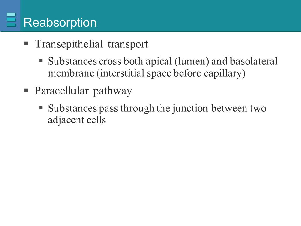 Reabsorption Transepithelial transport Paracellular pathway