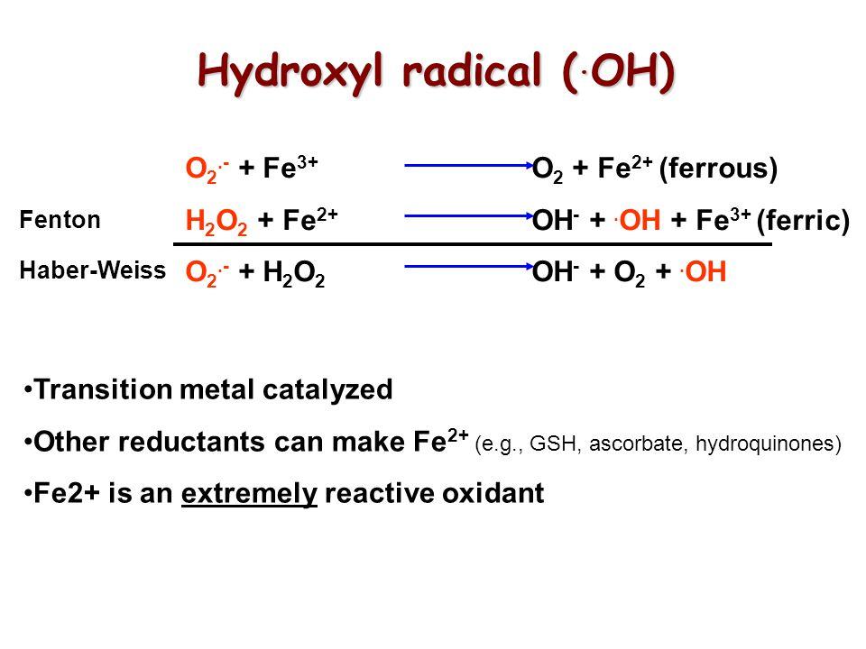Hydroxyl radical (.OH) O2.- + Fe3+ O2 + Fe2+ (ferrous)