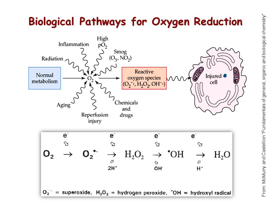 Biological Pathways for Oxygen Reduction