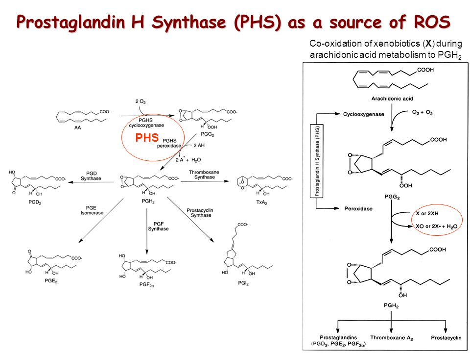 Prostaglandin H Synthase (PHS) as a source of ROS