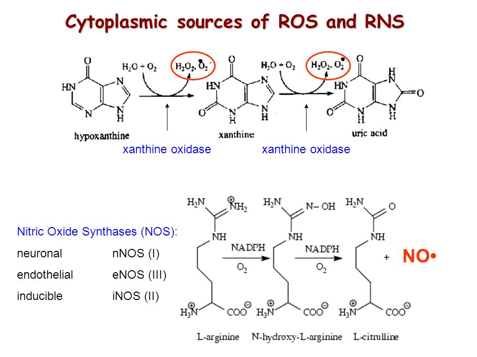 Cytoplasmic sources of ROS and RNS