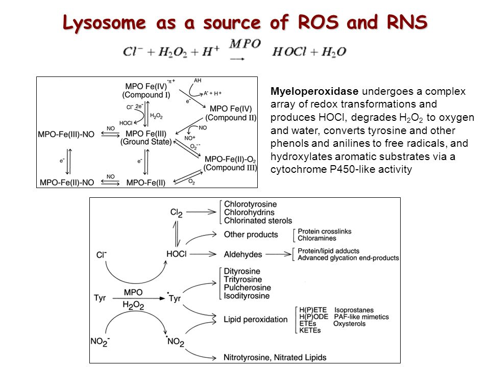 Lysosome as a source of ROS and RNS
