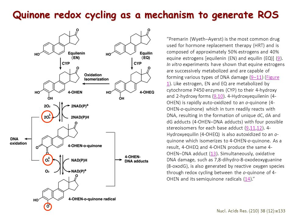 Quinone redox cycling as a mechanism to generate ROS