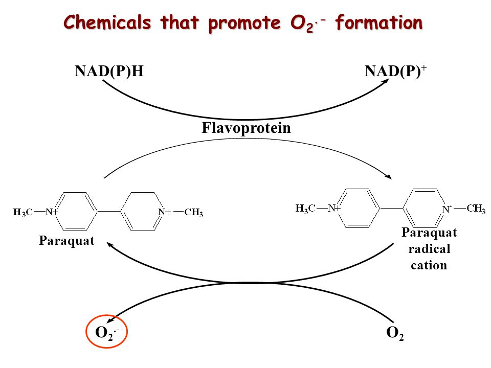 Chemicals that promote O2.- formation