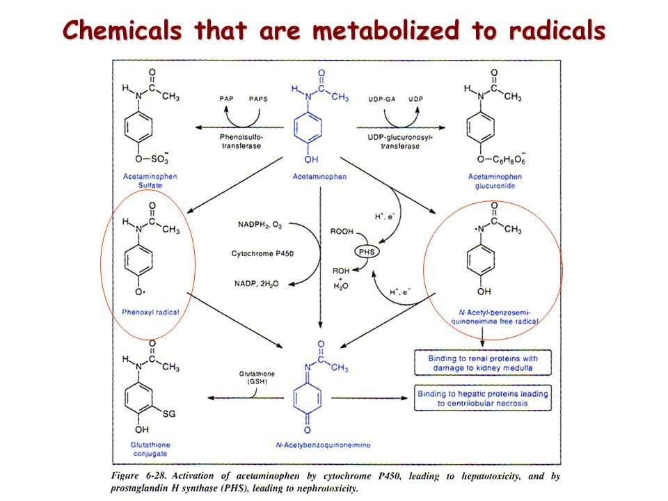 Chemicals that are metabolized to radicals