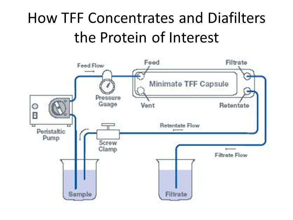 How TFF Concentrates and Diafilters the Protein of Interest