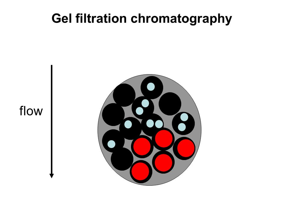 Gel filtration chromatography