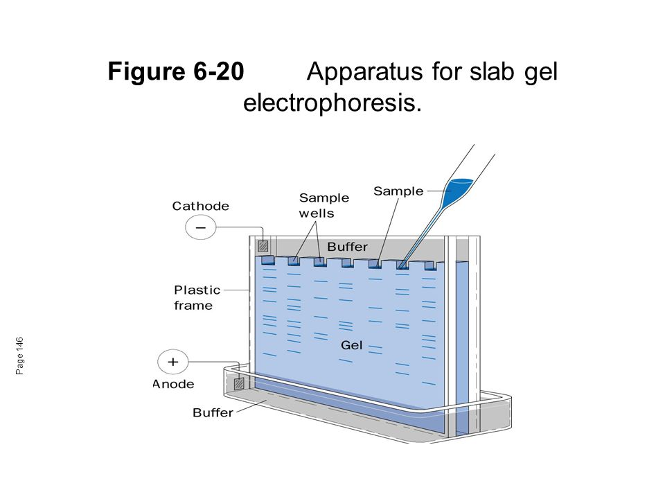 Figure 6-20 Apparatus for slab gel electrophoresis.
