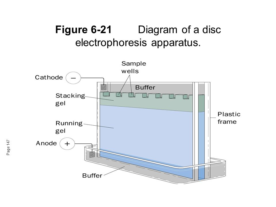 Figure 6-21 Diagram of a disc electrophoresis apparatus.