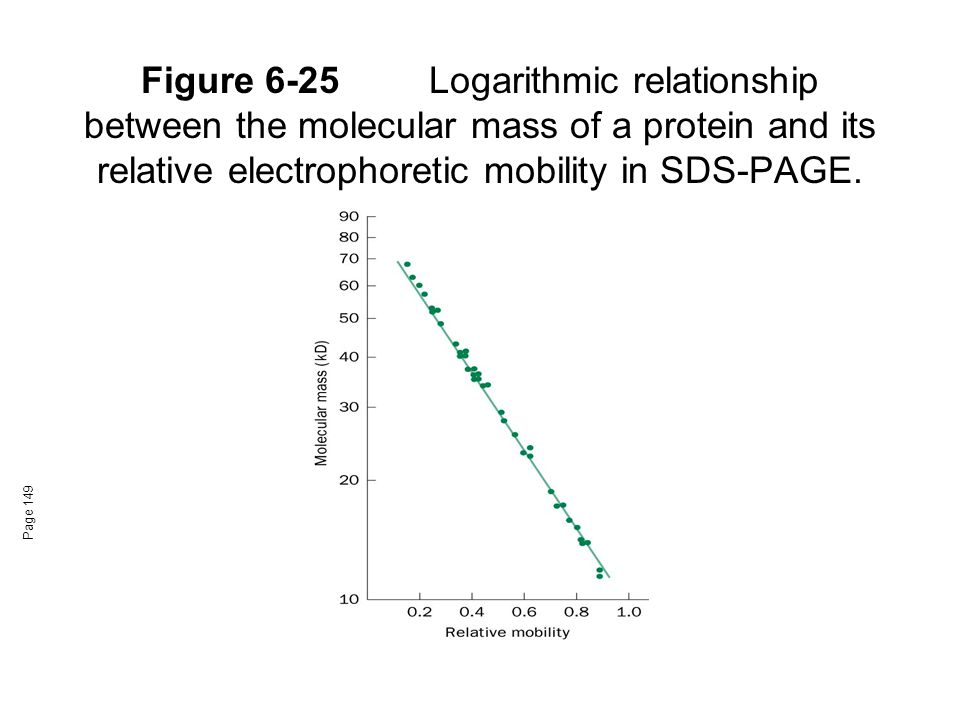 Figure 6-25 Logarithmic relationship between the molecular mass of a protein and its relative electrophoretic mobility in SDS-PAGE.