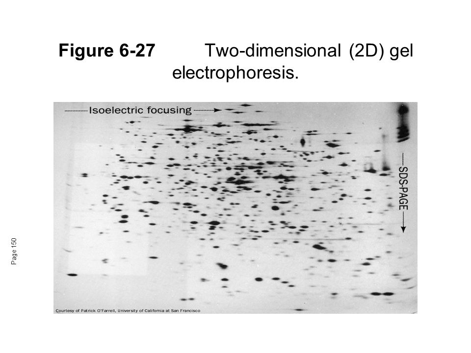 Figure 6-27 Two-dimensional (2D) gel electrophoresis.
