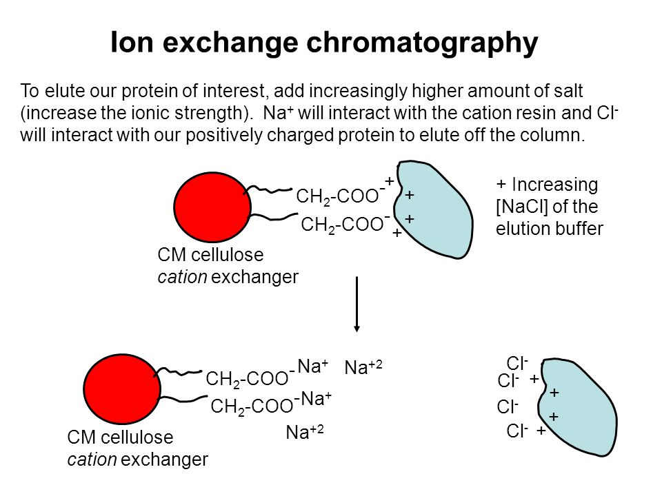 How Does Ion Exchange Chromatography Work?
